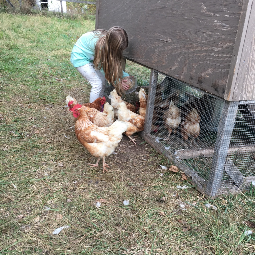 My daughter feeding the chickens